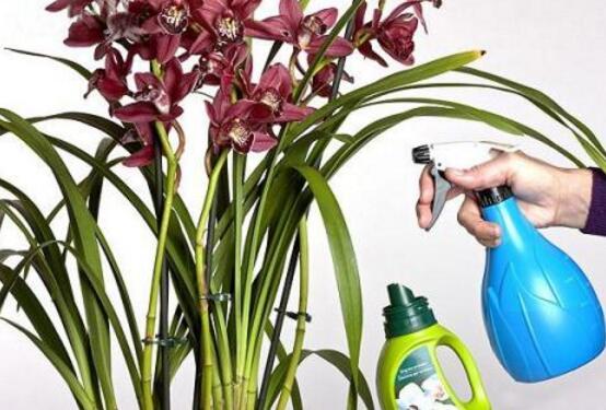 兰花怎么浇水,盘点兰花浇水方法
