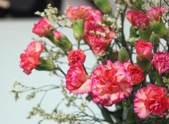 康乃馨鲜花怎么保鲜,七个基本方法方可百日鲜