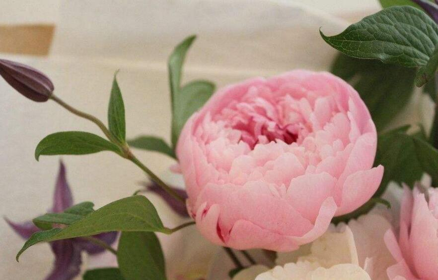 芍药花的花语是什么,代表着难舍难分的寓意