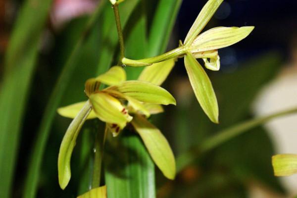 兰花怎么养才能开花,保障通风性和光照