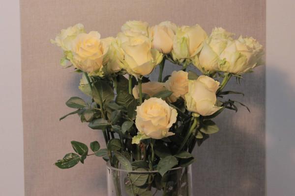 香槟玫瑰适合送哪些人,恋人/表白对象/老婆