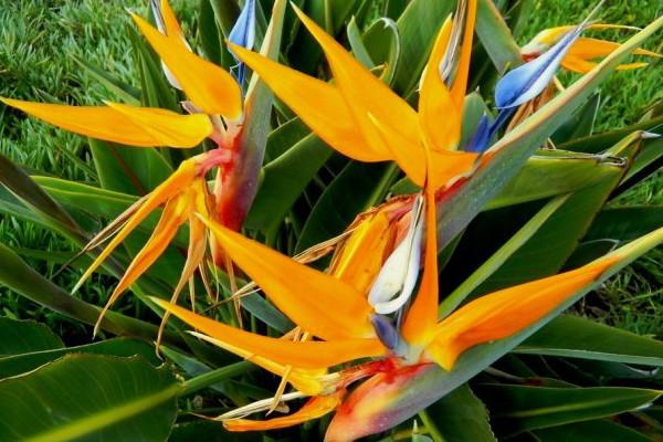 天堂鸟的养殖方法和注意事项,每天保持8小时以上光照