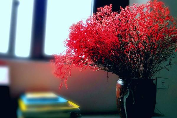 红色满天星花语含义,关心照料/不可或缺的配角