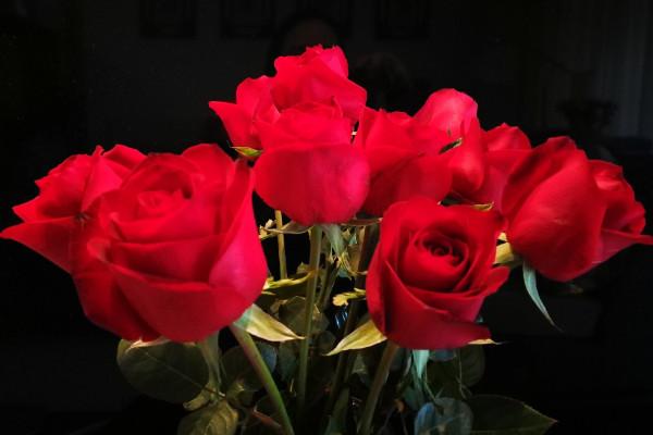 19朵玫瑰花的花语是什么,从一而忠/爱到永久